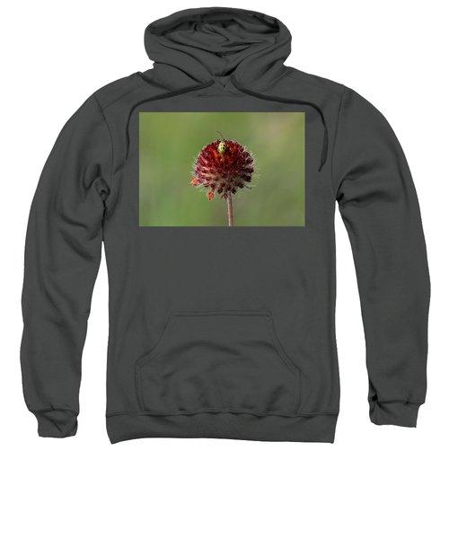 Over The Top Sweatshirt