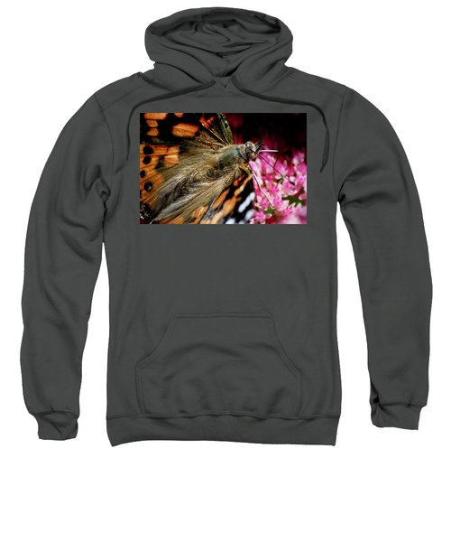 Painted Lady Butterfly Sweatshirt