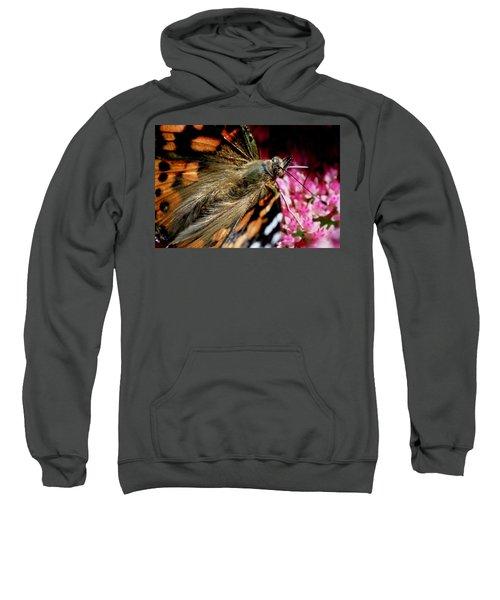 Painted Lady Butterfly Sweatshirt