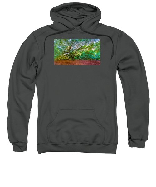 Panoramic Angel Oak Tree Charleston Sc Sweatshirt