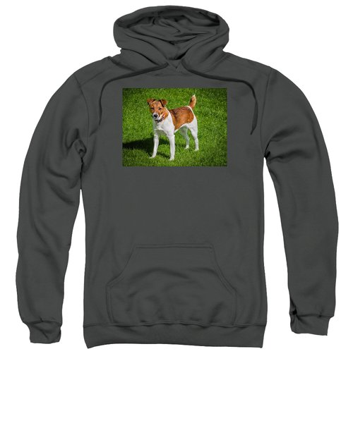 Parson Jack Russell Sweatshirt