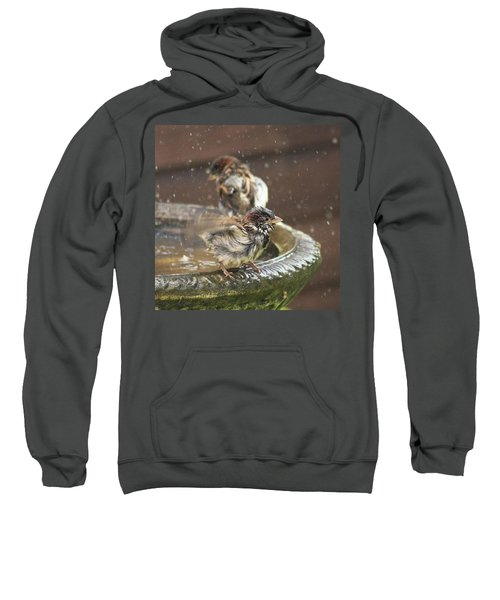 Pass The Towel Please: A House Sparrow Sweatshirt by John Edwards