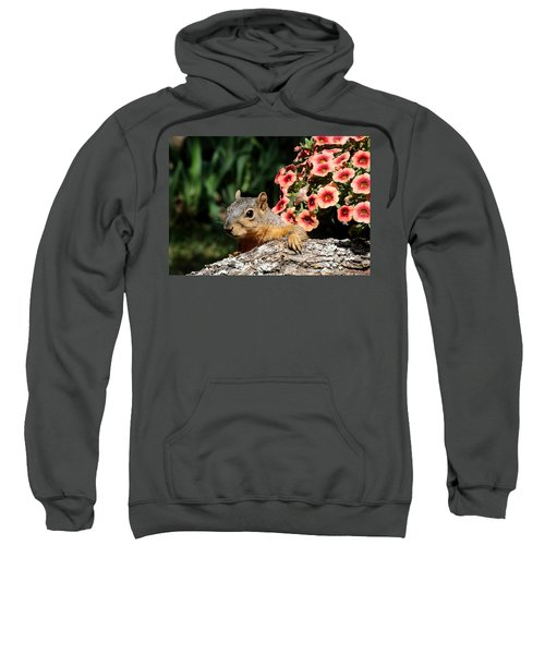 Peek-a-boo Squirrel Sweatshirt