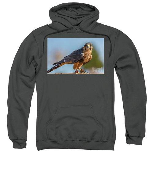Peregrine Falcon Wildlife Art By Kaylyn Franks Sweatshirt