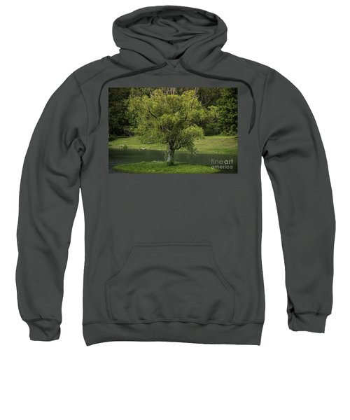 Perfect Tree Swing Sweatshirt