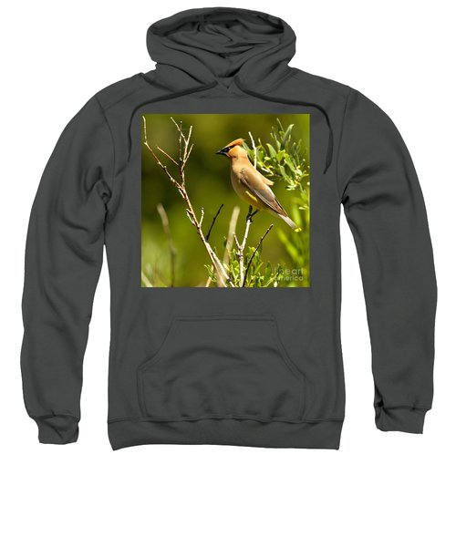 Perfectly Perched Sweatshirt by Adam Jewell