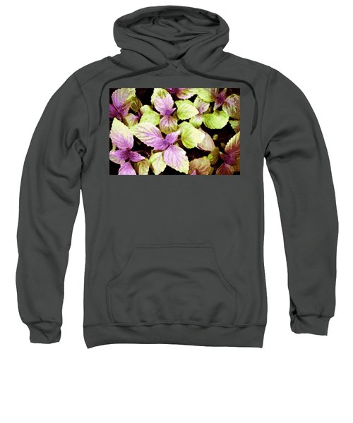 Perilla Beauty Sweatshirt by Winsome Gunning