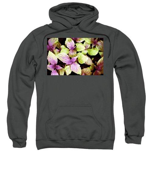 Perilla Beauty Sweatshirt