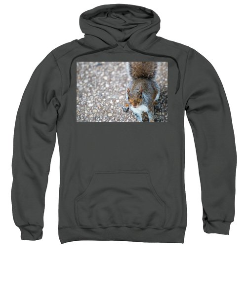 Photo Of Squirel Looking Up From The Ground Sweatshirt