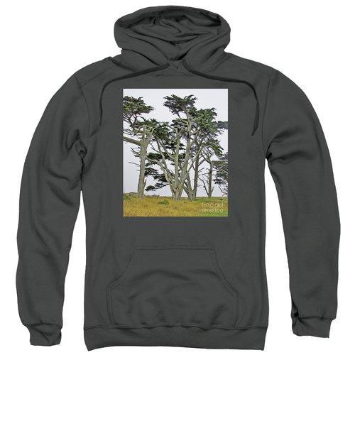 Pierce Pt. Study Sweatshirt