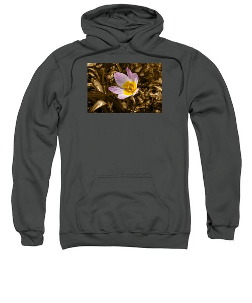 Pink And Yellow Tulip On Sepia Background Sweatshirt