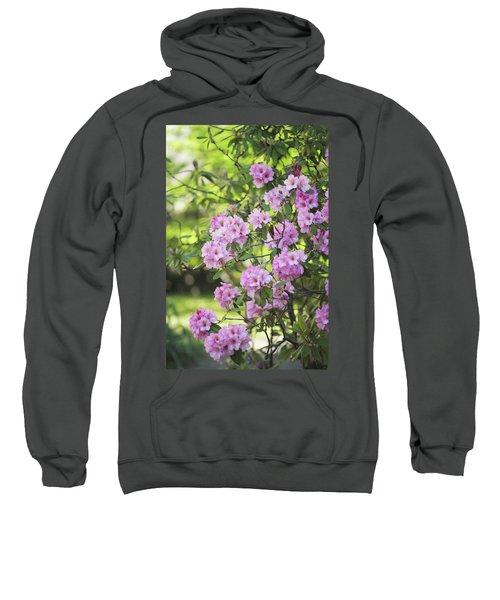 Pink Rhododendron Bloom Sweatshirt