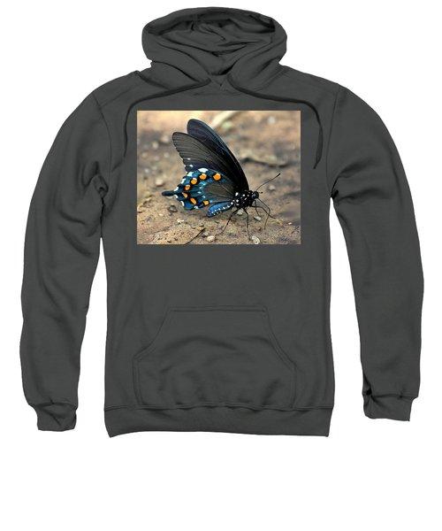 Pipevine Swallowtail Close-up Sweatshirt