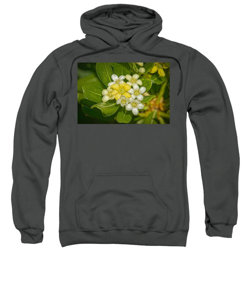Pittosporum Flowers Sweatshirt
