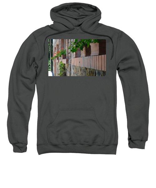 Plants In Windows Sweatshirt