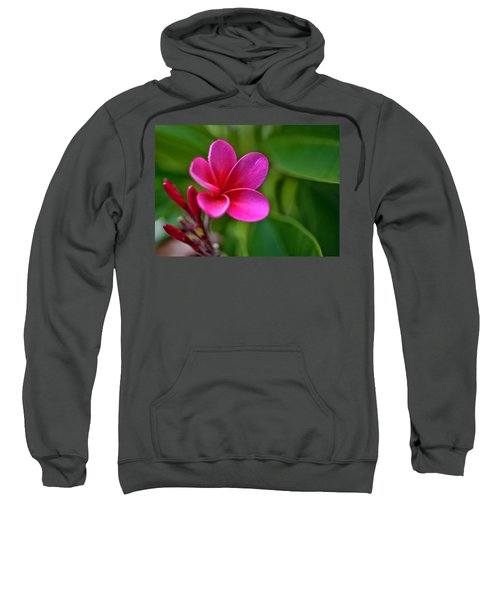 Plumeria - Royal Hawaiian Sweatshirt
