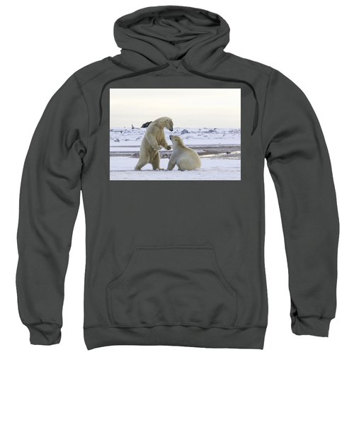 Polar Bear Play-fighting Sweatshirt