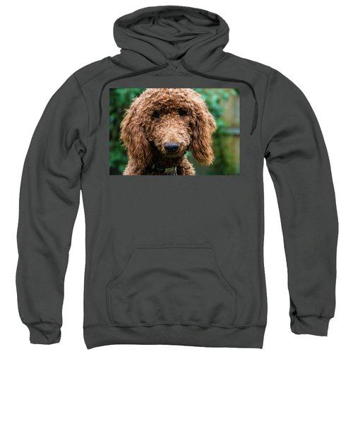 Poodle Pup Sweatshirt