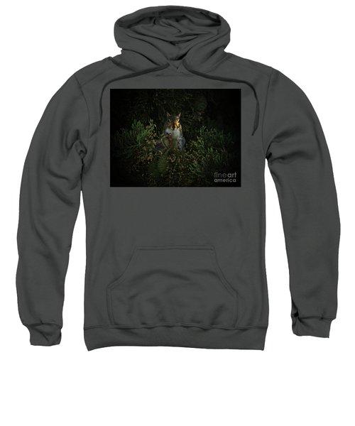 Portrait Of A Squirrel Sweatshirt