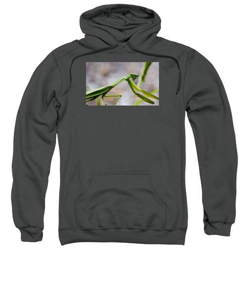 Praying Mantis Looking Sweatshirt by Jonny D