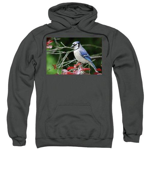Pretty Blue Jay Sweatshirt