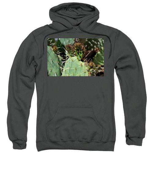 Prickly Pear Buds Sweatshirt