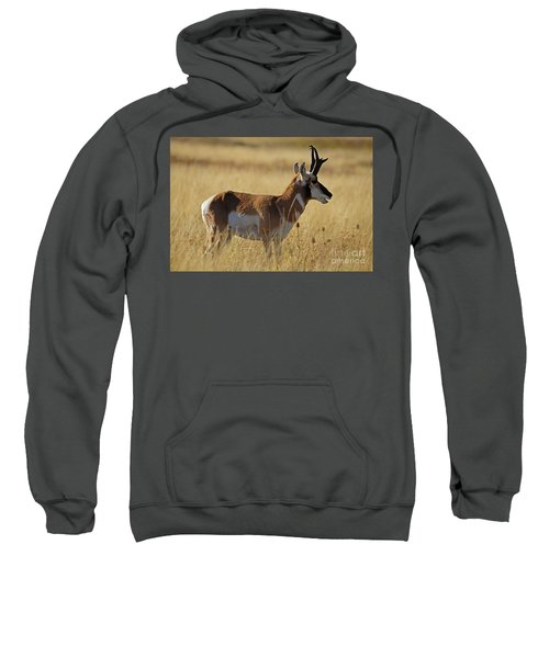 Pronghorn Antelope Sweatshirt
