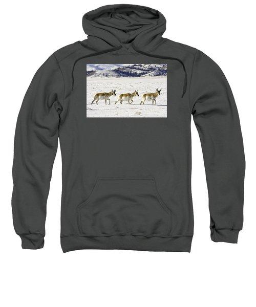Pronghorns Sweatshirt
