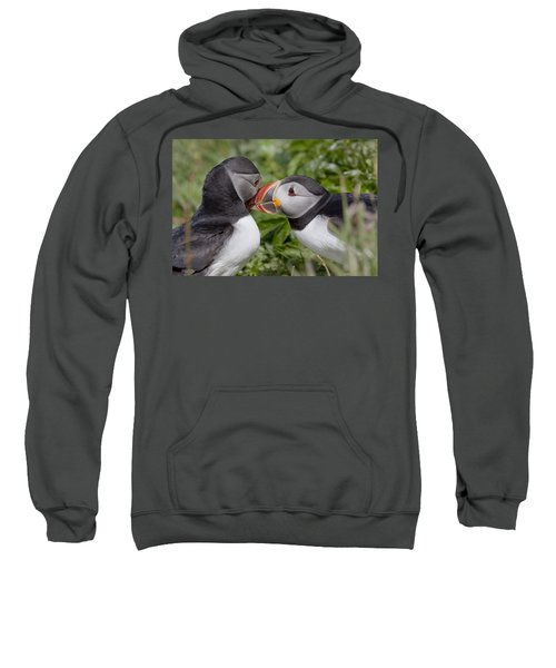 Puffin Love Sweatshirt