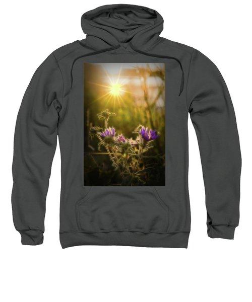 Purple Aster Glow Sweatshirt