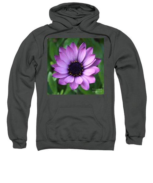 Purple Daisy Square Sweatshirt