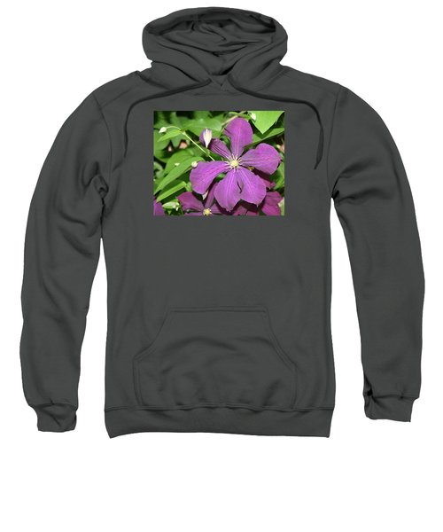 Purple Delite Sweatshirt
