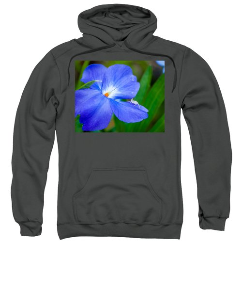 Morning Glory Sweatshirt
