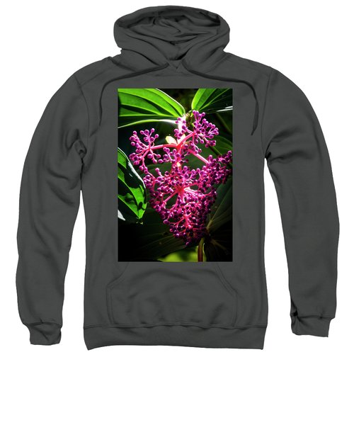 Purple Plant Sweatshirt