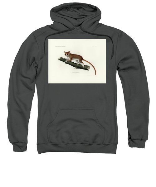 Sweatshirt featuring the drawing Pygmy Mouse Lemur by Hugo Troschel