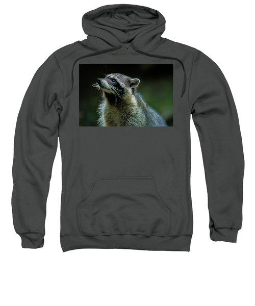Raccoon 1 Sweatshirt
