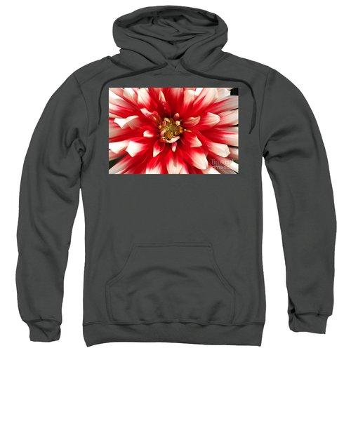 Radiant Dahlia Sweatshirt