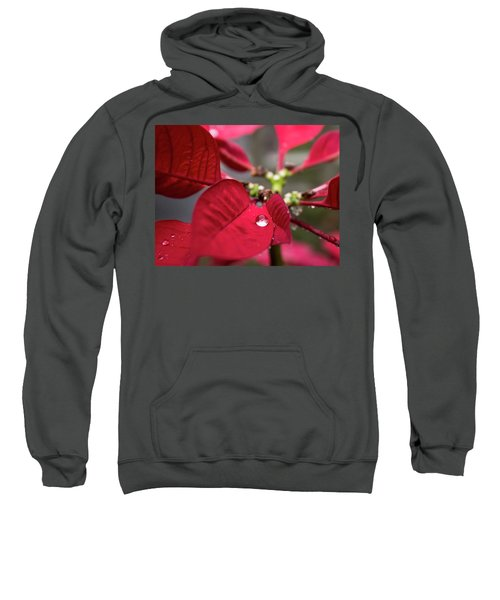 Rain Drop On A Poinsettia  Sweatshirt