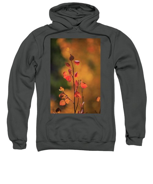 Red And Gold Sweatshirt