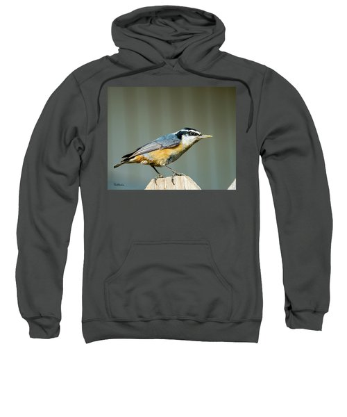 Red-breasted Nuthatch Sweatshirt