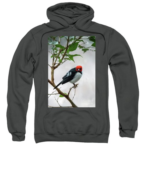 Red Capped Cardinal Sweatshirt