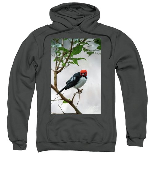 Red Capped Cardinal Sweatshirt