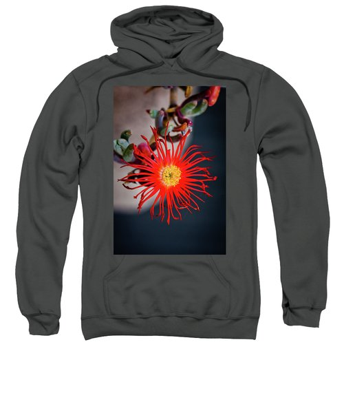 Red Crab Flower Sweatshirt