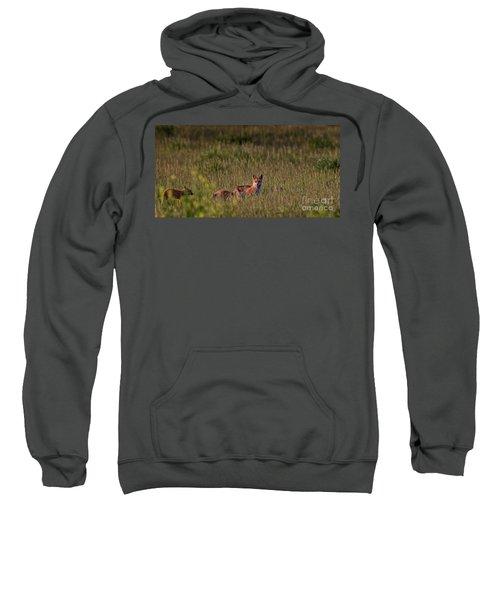 Red Fox Family Sweatshirt