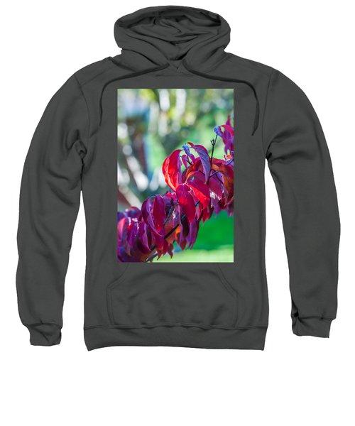 Red Leaves - 9592 Sweatshirt