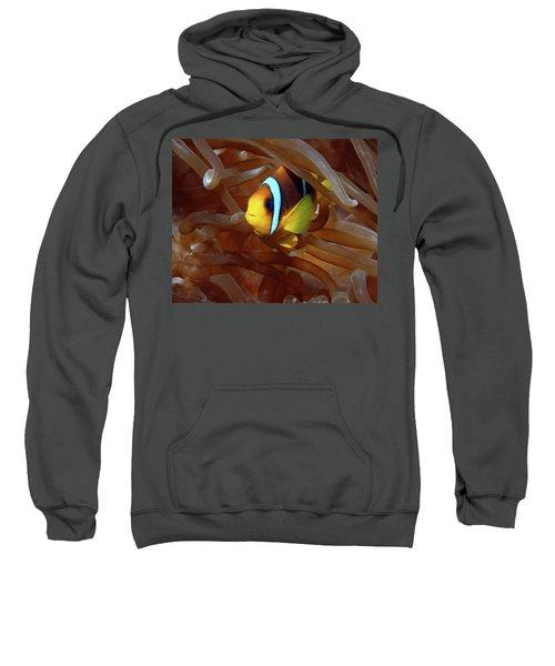 Red Sea Clownfish, Eilat, Israel 8 Sweatshirt