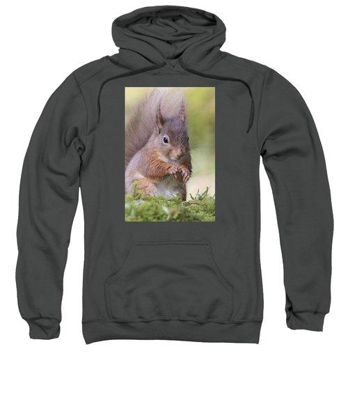 Red Squirrel - Scottish Highlands #1 Sweatshirt