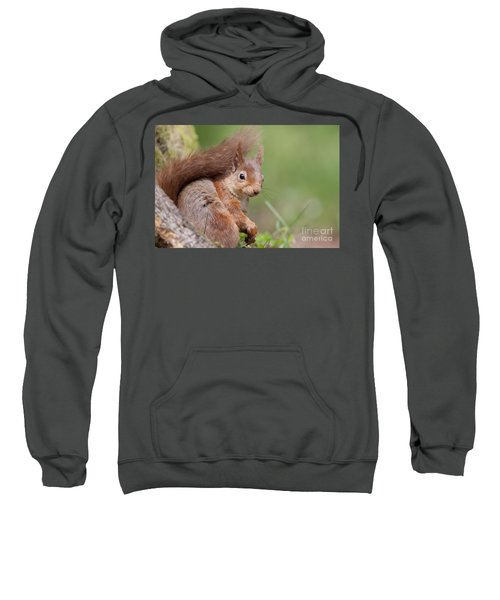 Red Squirrel - Scottish Highlands  #17 Sweatshirt