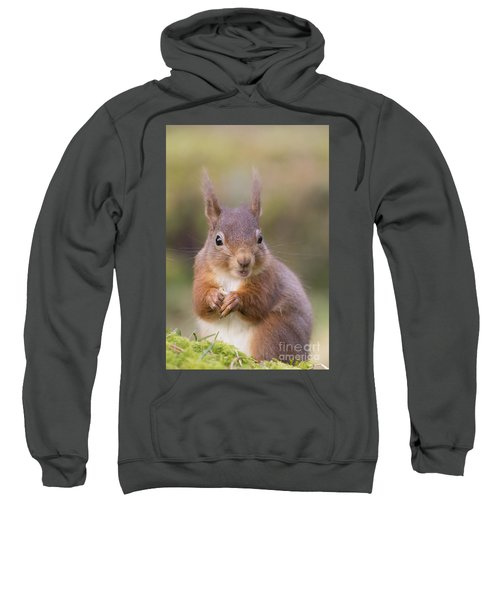 Red Squirrel - Scottish Highlands #18 Sweatshirt