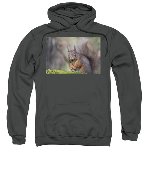 Red Squirrel - Scottish Highlands #26 Sweatshirt
